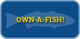 Own a Fish