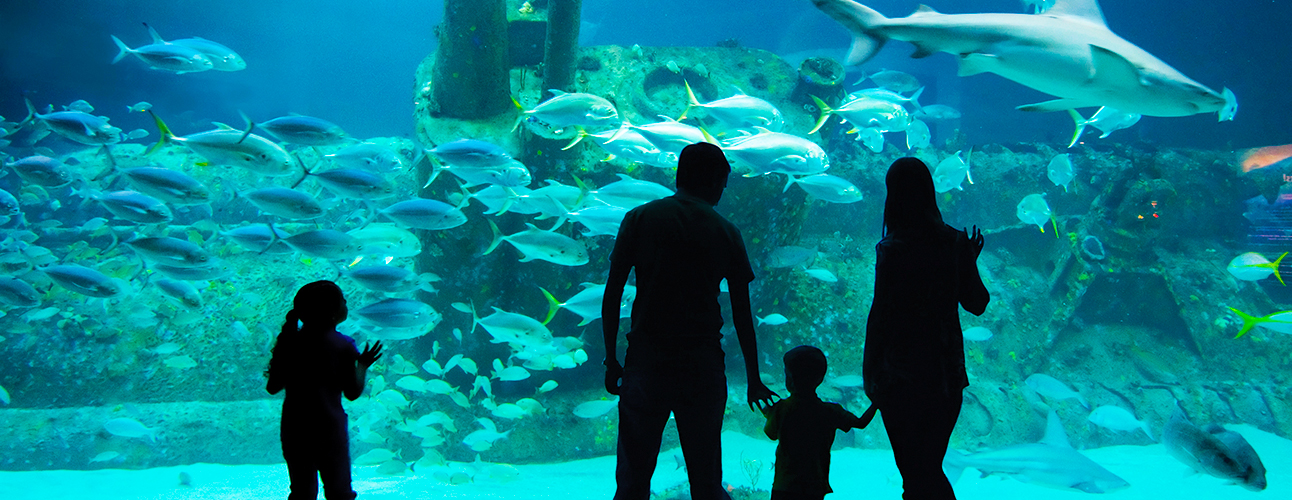 Family Memberships North Carolina Aquarium Society